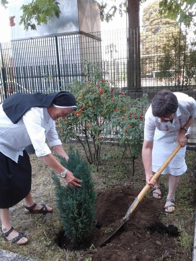 Plantar árboles in Italia